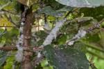 1 mm environ - Banaue - 15.9.14