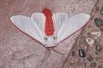 Erebidae - Arctiinae - Aloa sp - 55 mm envergure - Bulusan - 12.11.15